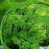 پیش-نویس-پیمان-جهانی-محیط-زیست-به-سازمان-ملل-ارائه-می-شود - راهاندازی دفتر محیط زیست در وزارت ورزش و جوانان