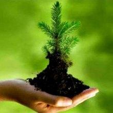 آموزشهای محیط زیستی در ۱۰۸ هزار مدرسه - محیط زیست
