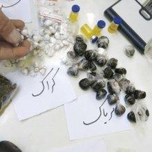 مجلس - طرح کاهش مجازات اعدام محکومین مواد مخدر بازنگری شد