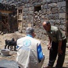 سوریه - فائو: بیش از 6 میلیون سوری همچنان از داشتن وعده غذایی بعدی مطمئن نیستند