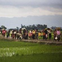����������������-���������������� - 90 هزار آواره و صدها کشته حاصل دور جدید خشونتها علیه روهینجاهای میانمار