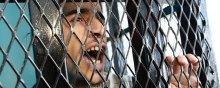 انتقاد شدید نهادهای حقوقبشری از زندانهای مخوف امارات در یمن - یمن. زندان